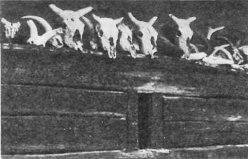 Черепа жертвенных животных <br>на западной стене Рекома